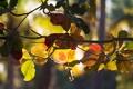 Картинка осень, ветки, солнце, цвета, листья, ветви, природа