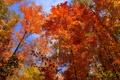 Картинка осень, небо, листья, деревья, Канада, Онтарио, багрянец