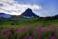 Картинка небо, трава, снег, деревья, цветы, гора, сша