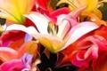 Картинка абстракция, лепестки, лилия, рендеринг, природа