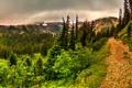 Картинка лес, деревья, горы, тучи, тропа, ущелье