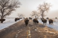Картинка снег, Buffalo, Blocking Road