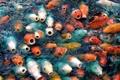 Картинка природа, вода, рыбы