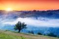 Картинка солнце, туман, деревья, рассвет, холмы