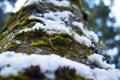 Картинка лес, снег, дерево, Мох, кора, снегопад