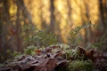 Картинка природа, лес, макро