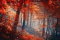 Картинка лес, фон, природа