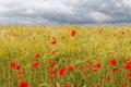 Картинка облака, колосья, трава, маки, красные, поле, цветы