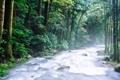 Картинка landscape, лес, поток, камни, горная река