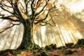 Картинка лес, лучи, деревья, дымка