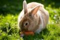 Картинка природа, фон, кролик