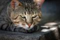 Картинка взгляд, морда, Кот