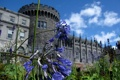 Картинка цветы, замок, сад, Garden, Canon SD880, Dublin Castle