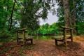 Картинка лес, деревья, пейзаж, скамейка, природа, озеро