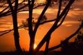 Картинка деревья, закат, when the sun goes down