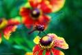 Картинка лето, Цветы, стрекоза, summer, flowers