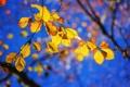 Картинка осень, небо, листья, ветка
