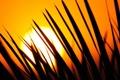 Картинка закат, трава, солнце