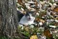 Картинка осень, кошка, природа