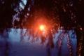Картинка зима, снег, закат, елки
