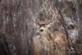 Картинка осень, животные, природа, олень, заповедник