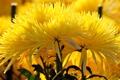 Картинка природа, куст, букет, лепестки, сад
