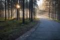 Картинка лес, дорога, утро