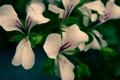 Картинка растение, цветок, лепестки, макро, цветы