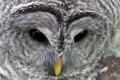 Картинка сова, взгля, клюв, перья