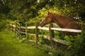 Картинка лето, деревья, лошадь, забор, ограда