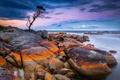 Картинка море, закат, камни, дерево, берег, Australia, Tasmania
