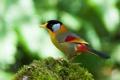 Картинка птица, краски, перья, хвост