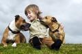 Картинка собаки, настроение, мальчик