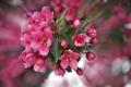Картинка макро, цветы, весна, цветение