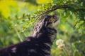 Картинка кошка, трава, кот, кошак