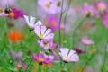 Картинка поле, цветы, растения, лепестки, луг