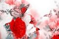 Картинка бабочки, цветы, цветение, blossom, гвоздика, flowers, веточки