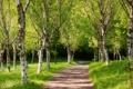 Картинка дорожка, зелёные деревья, парк, лето