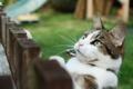 Картинка кошка, кот, взгляд, забор