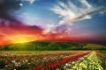 Картинка цветы, горы, розы