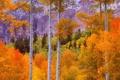 Картинка осень, лес, листья, деревья, пейзаж, горы, багрянец