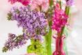 Картинка цветы, сирень, гиацинты