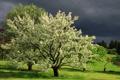 Картинка поле, лето, небо, дерево
