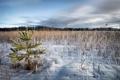 Картинка зима, поле, ёлка