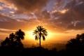 Картинка небо, солнце, город, пальма