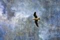 Картинка небо, стиль, фон, птица