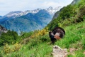 Картинка лес, лето, трава, горы, птица, склон, тетерев