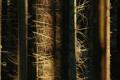 Картинка стволы, лес, свет, деревья, природа
