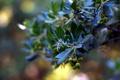 Картинка природа, фон, листья, ветки
