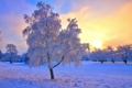 Картинка зима, природа, иний, солнце, дерево